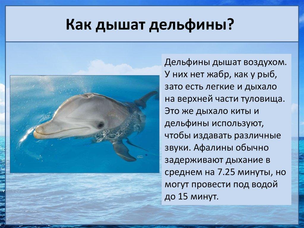 у дельфина легкие или жабры