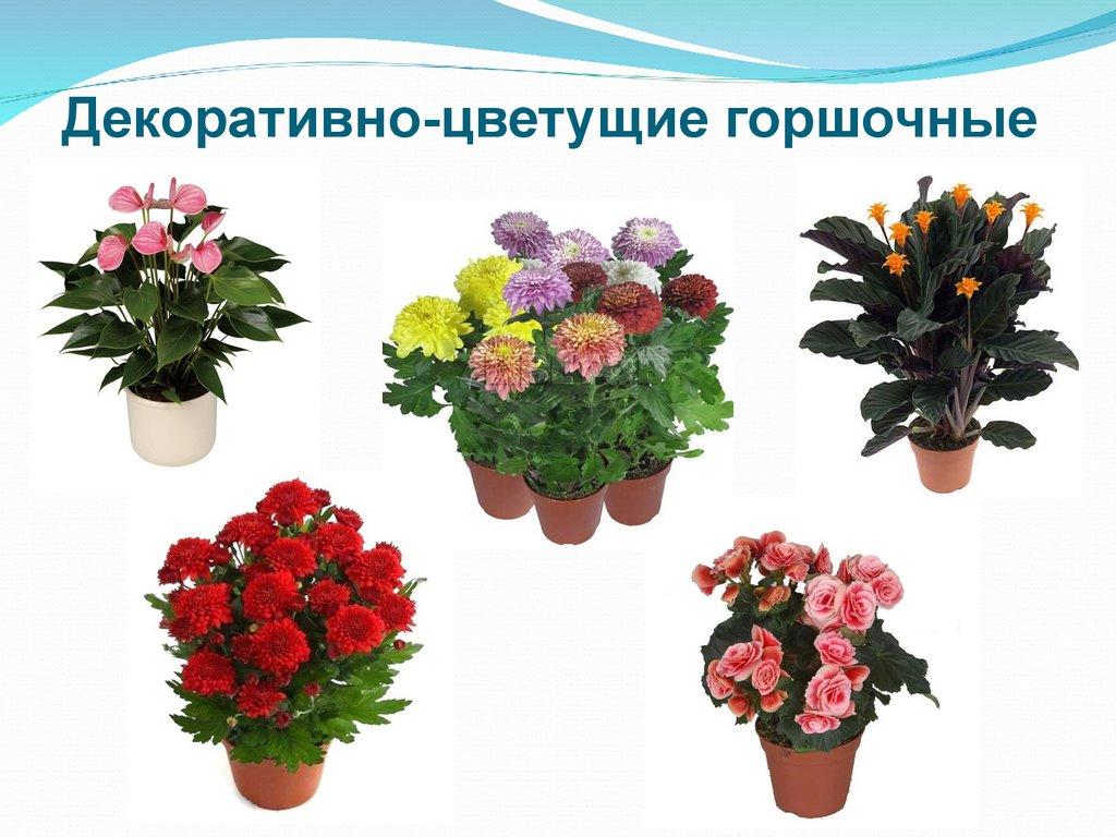 домашние цветущие растения картинки с названиями шкафчик можно легко