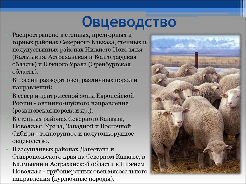 развитие советских короткий бизнес план овцеводства таблицы фото баня