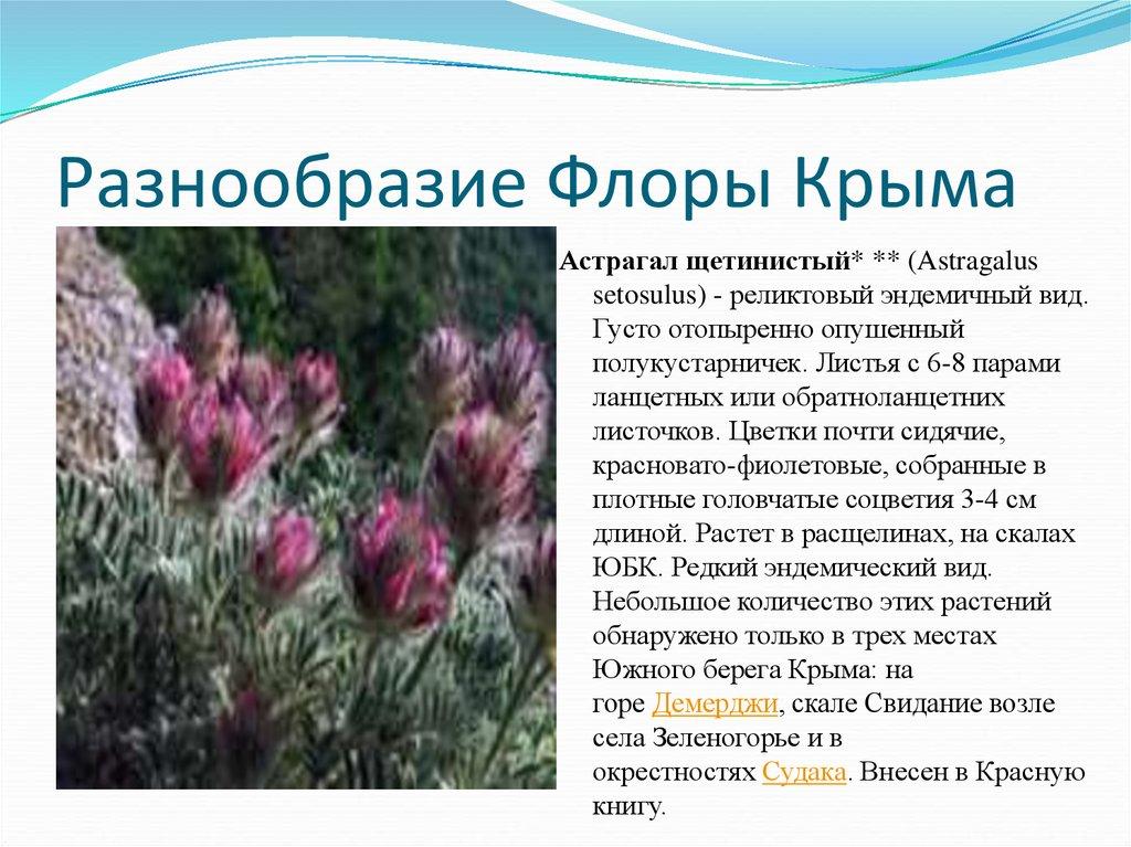 обычная флора россии кратко это дает повод