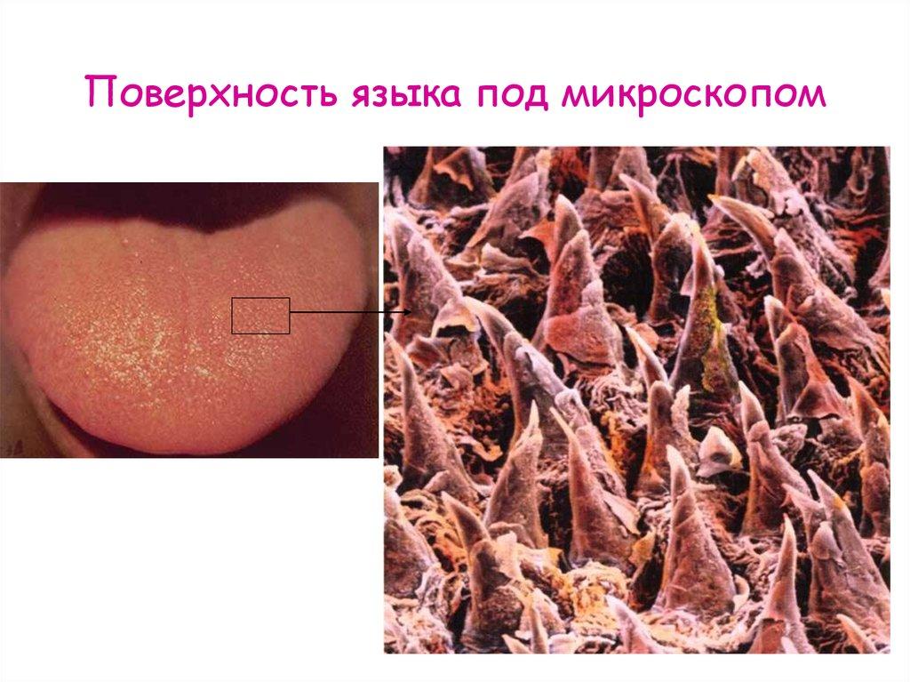 Женская задница под микроскопом 4
