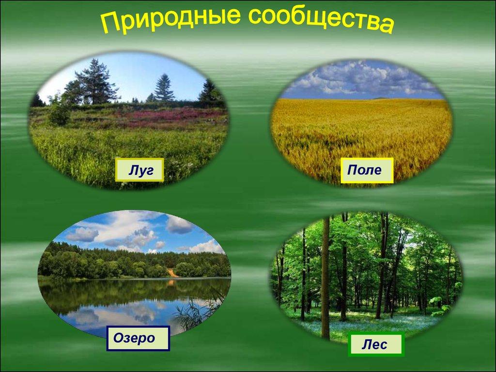 Реферат природное сообщество болото 2564