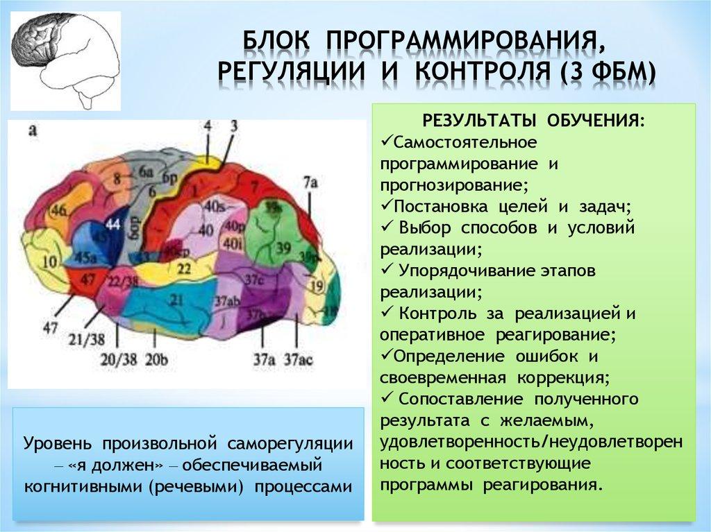 Девушка модель работы мозга лурия комплимент для девушки о ее работе