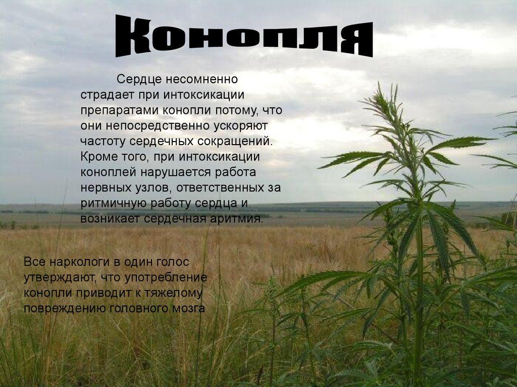 Не вред конопля и от минусы употребления и марихуаны плюсы