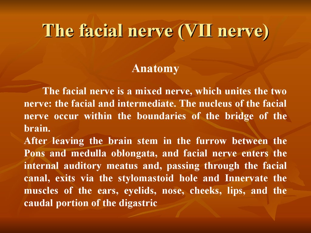 The facial nerve (VII nerve)