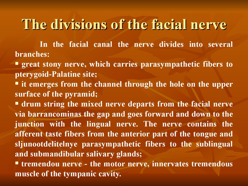 The divisions of the facial nerve