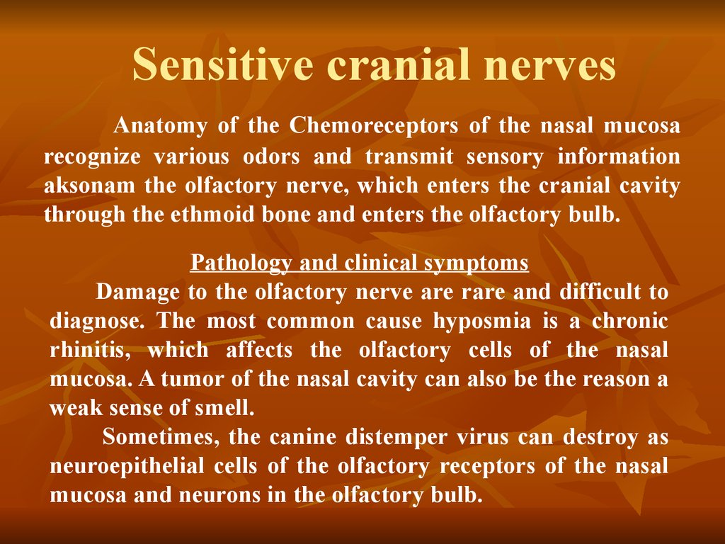 Sensitive cranial nerves