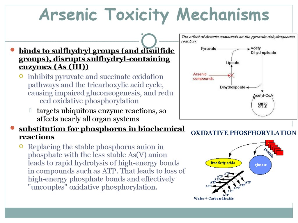Arsenic Toxicity Mechanisms