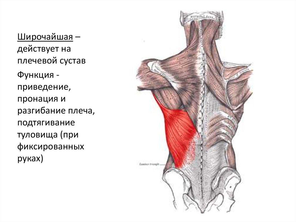 Пронация плечевого сустава непроходящая боль в плечевом суставе