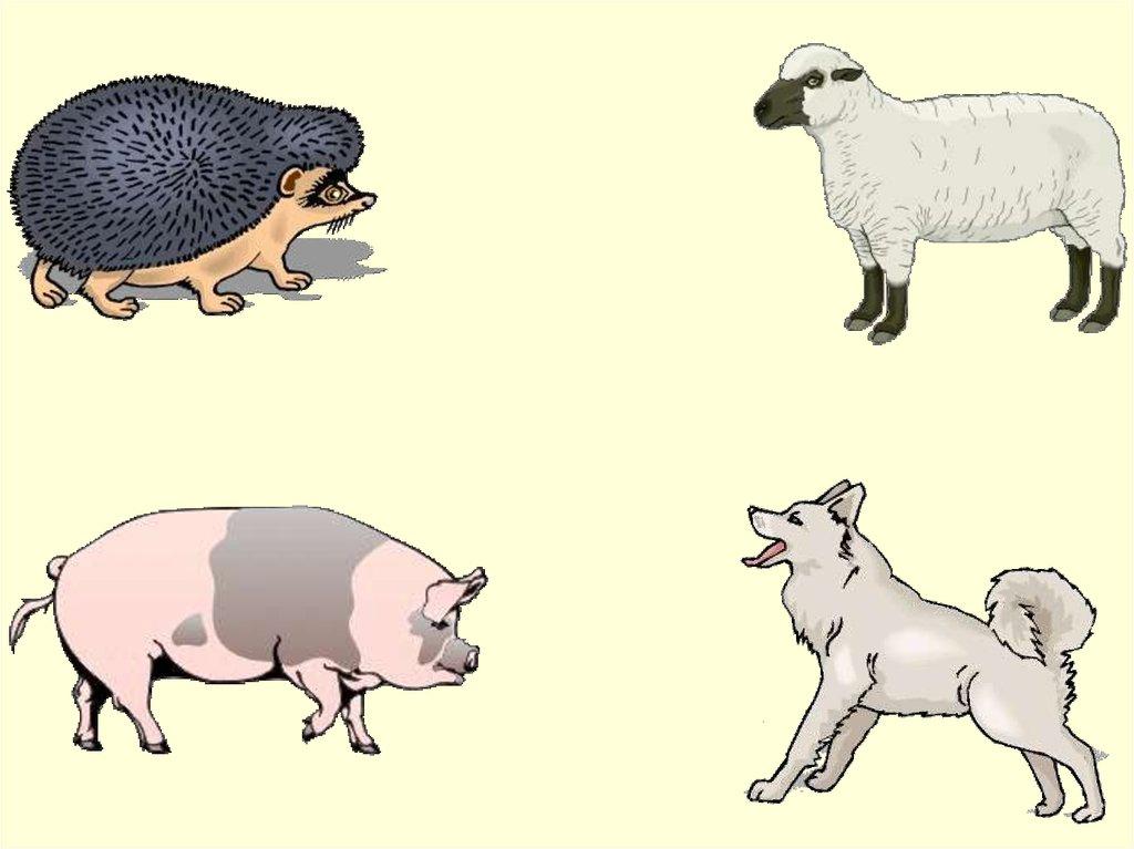 четвертый лишний картинки с домашними животными размер