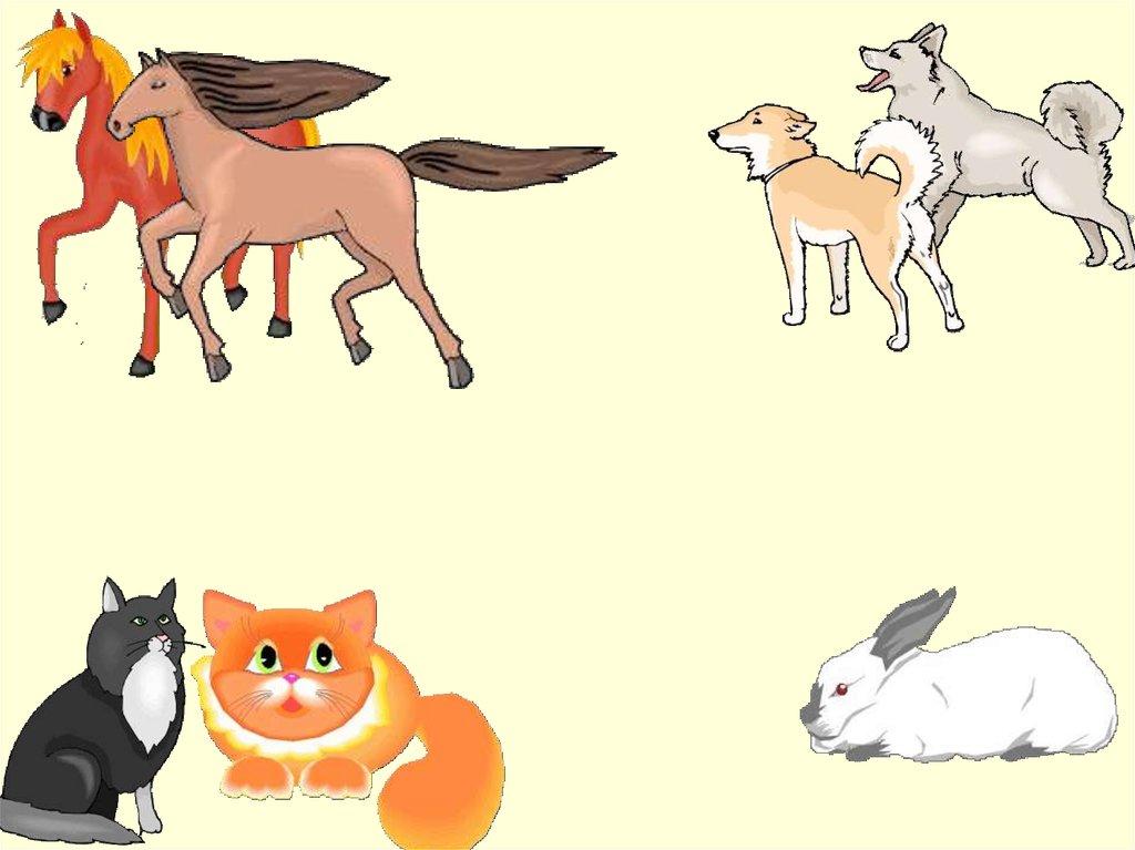 четвертый лишний картинки с домашними животными