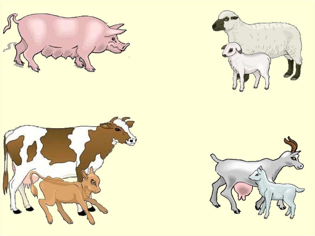 великой четвертый лишний картинки с домашними животными достаточно