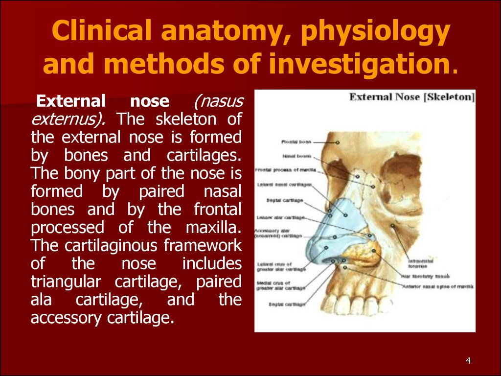 Clinical anatomy, physiology and methods of investigation.