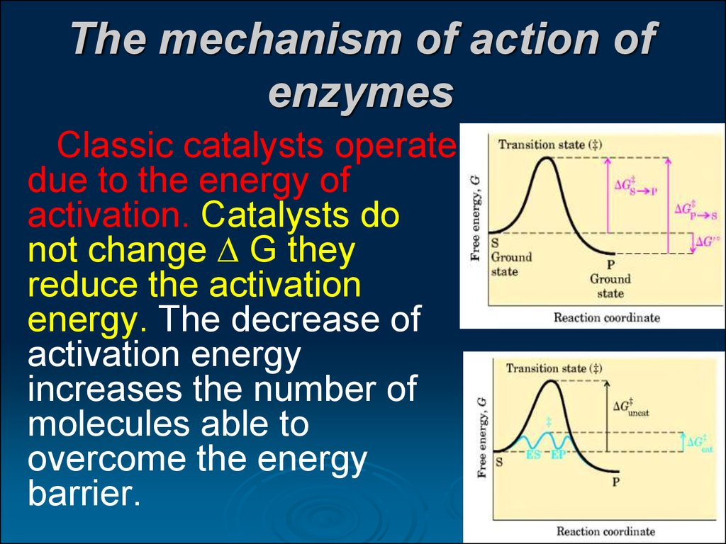 The mechanism of action of enzymes