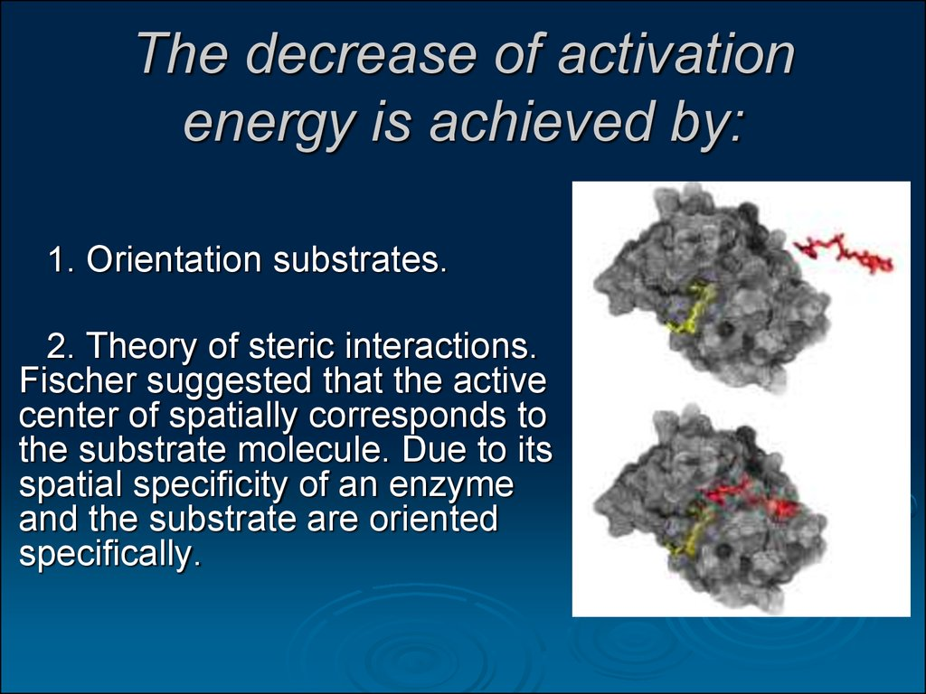 The decrease of activation energy is achieved by: