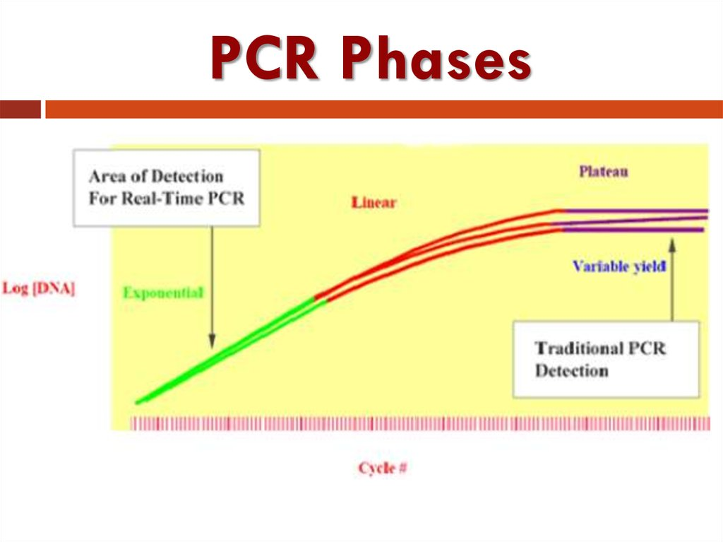 PCR Phases