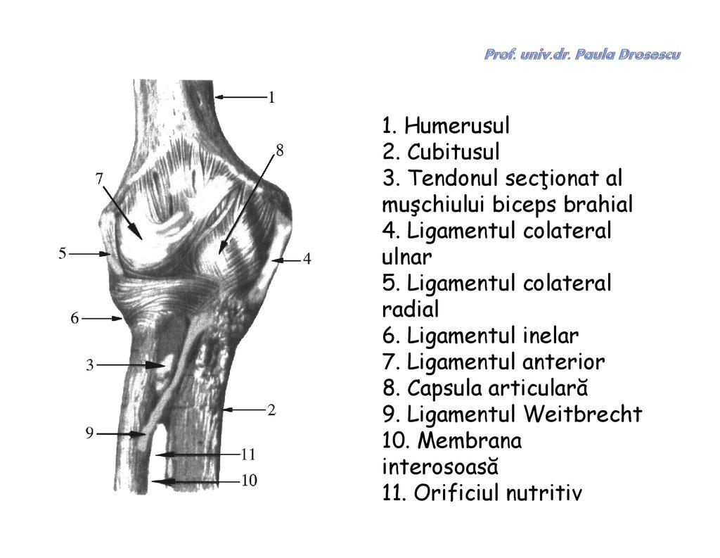 Mijloace pentru întărirea articulațiilor și ligamentelor, Enter your keyword below