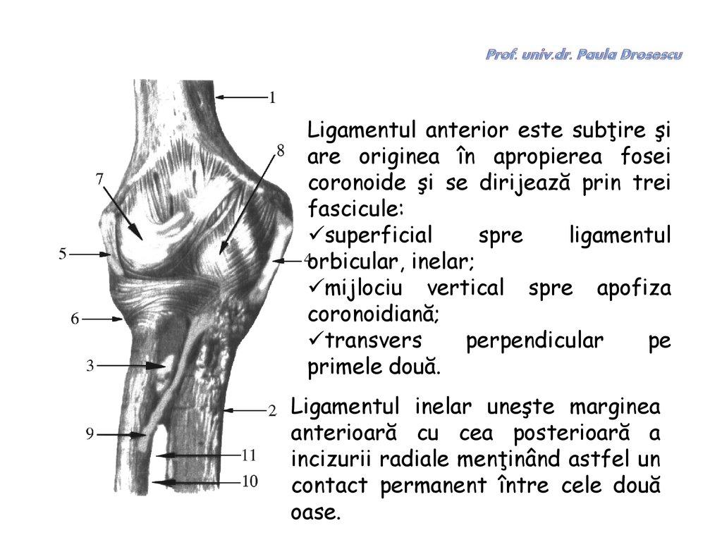 mijloace pentru întărirea articulațiilor și ligamentelor