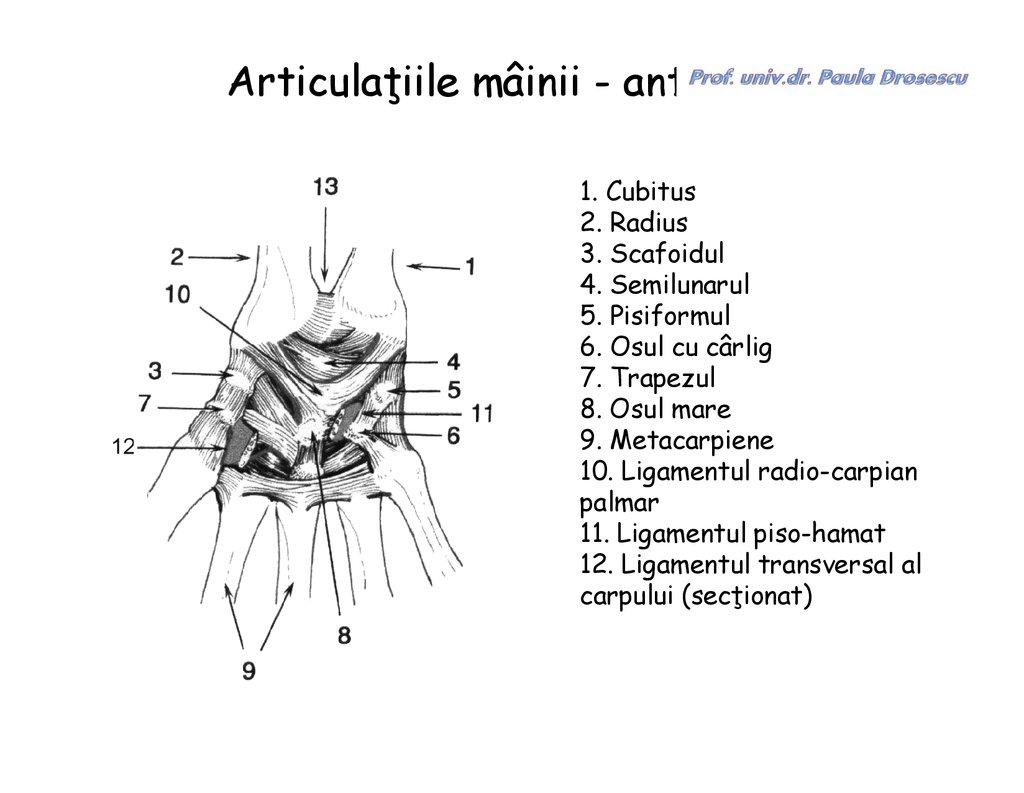 ce transformă articulațiile dezvoltați articulația umărului după accidentare