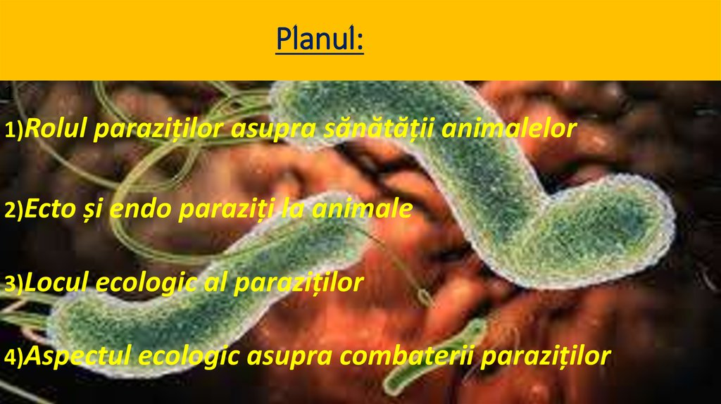 Oxiuroza: cauze, transmitere, simptome, diagnostic, preventie si tratament   Bioclinica