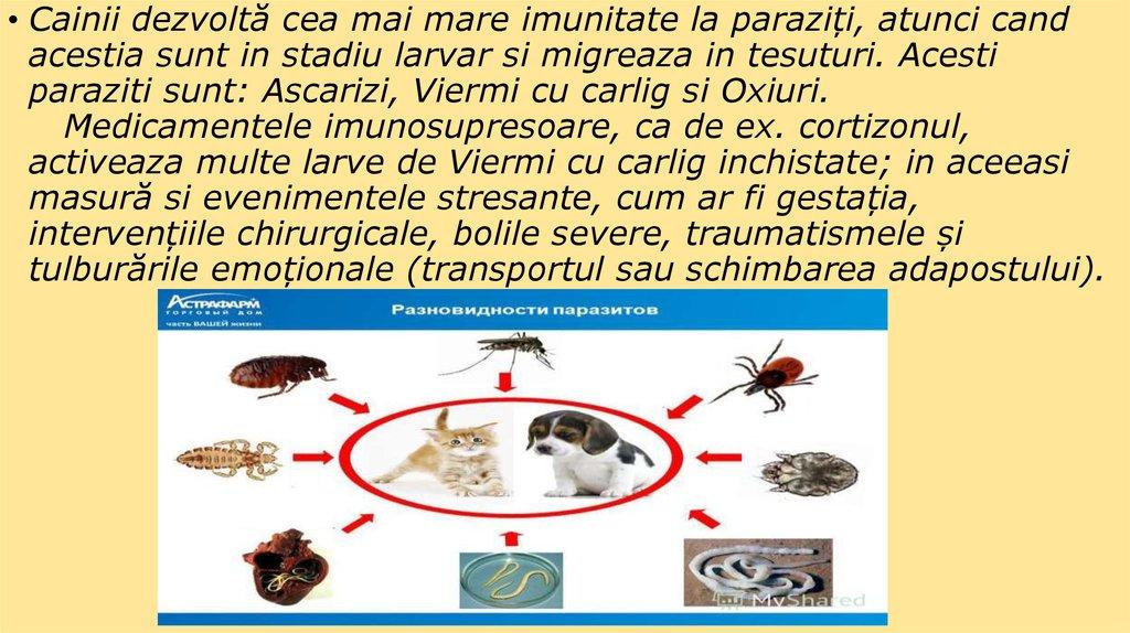 Parazita giardia pierdere în greutate. Parazitozele intestinale: giardioza si ascaridioza