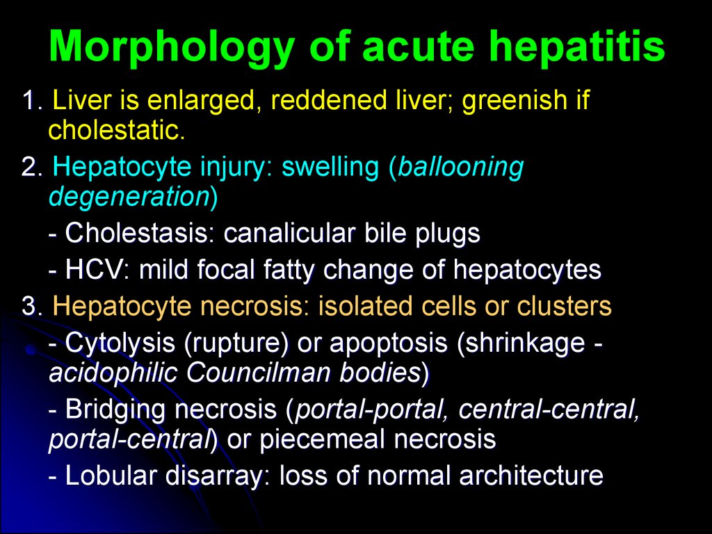 Morphology of acute hepatitis