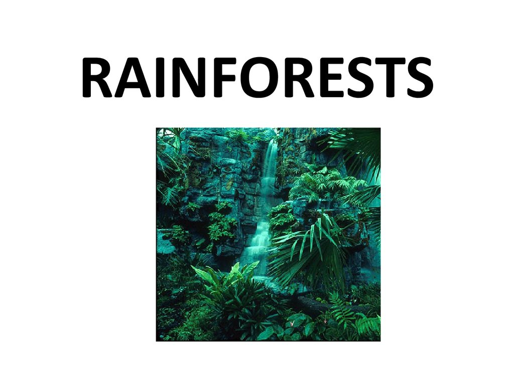 rainforest deforestation speech Deforestation speech of injustice akhil varanasi the deforestation of the amazon the rain forest song - duration:.