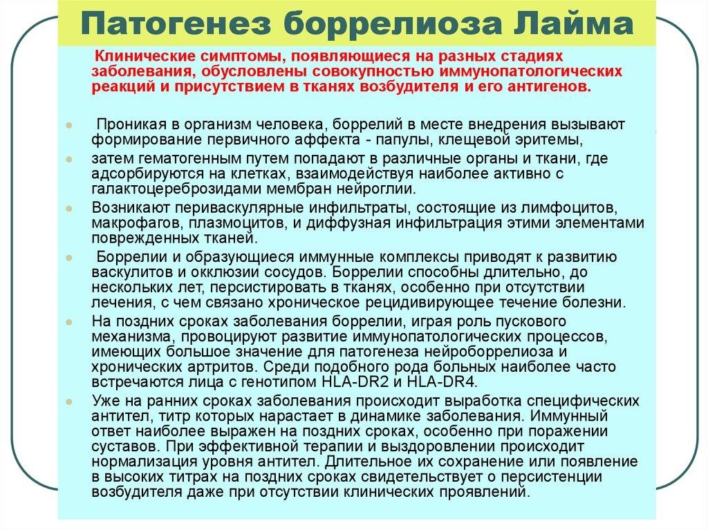 Болезнь лайма патогенез