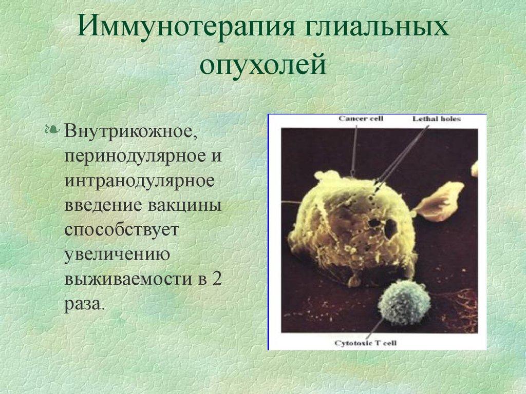 download Магистерская