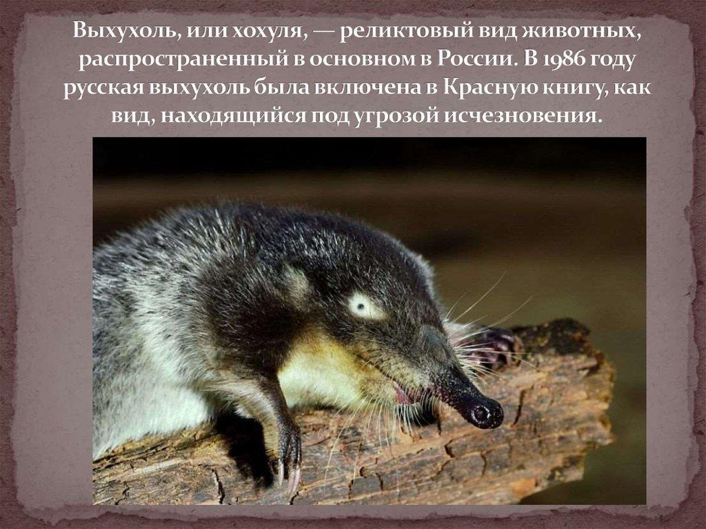 этой статье выхухоль фото животного и описание найдётся