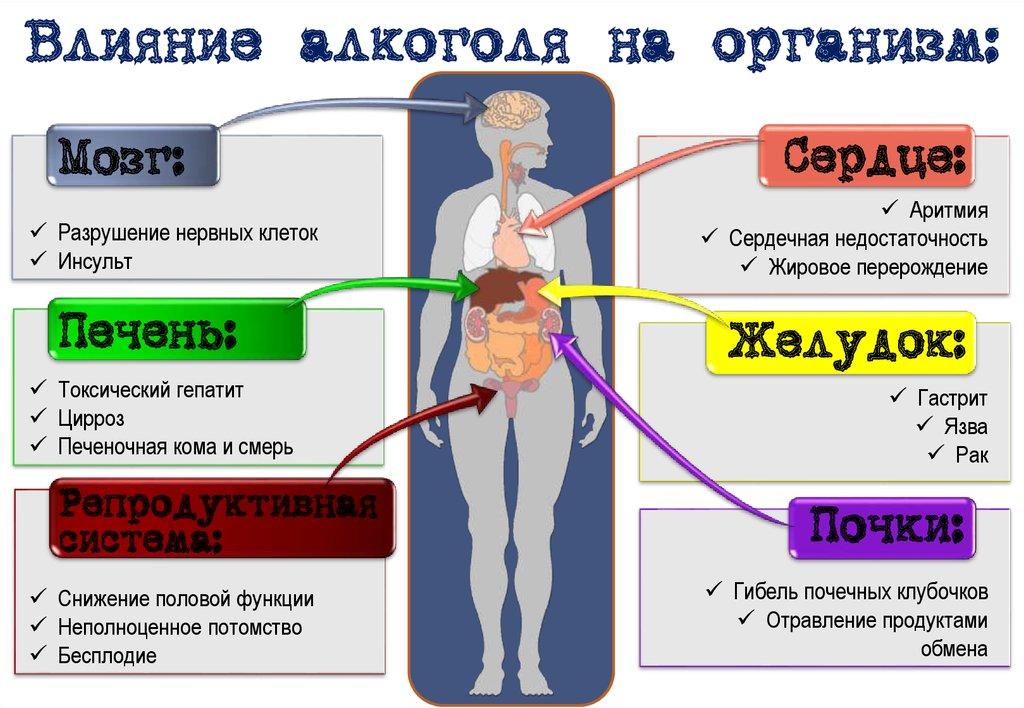 Влияние алкоголя на жизненные функции организма реферат 8866