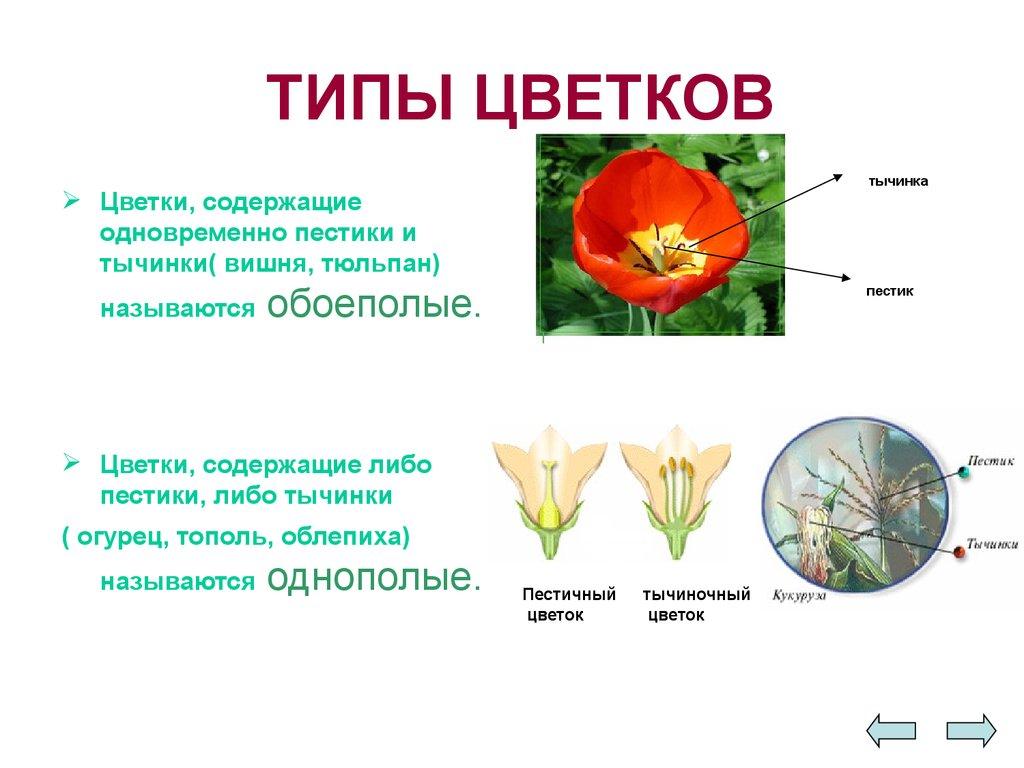 Орган размножения растений цветок