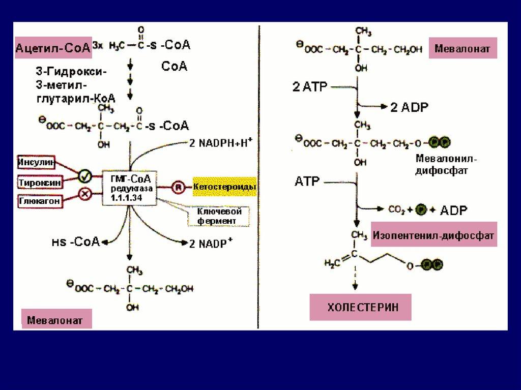 повышен холестерин гемоглобин крови