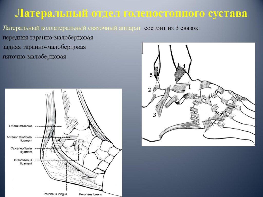 Пвус голеностопного сустава суставная гимнастика доктора бубновского смотреть онлайн