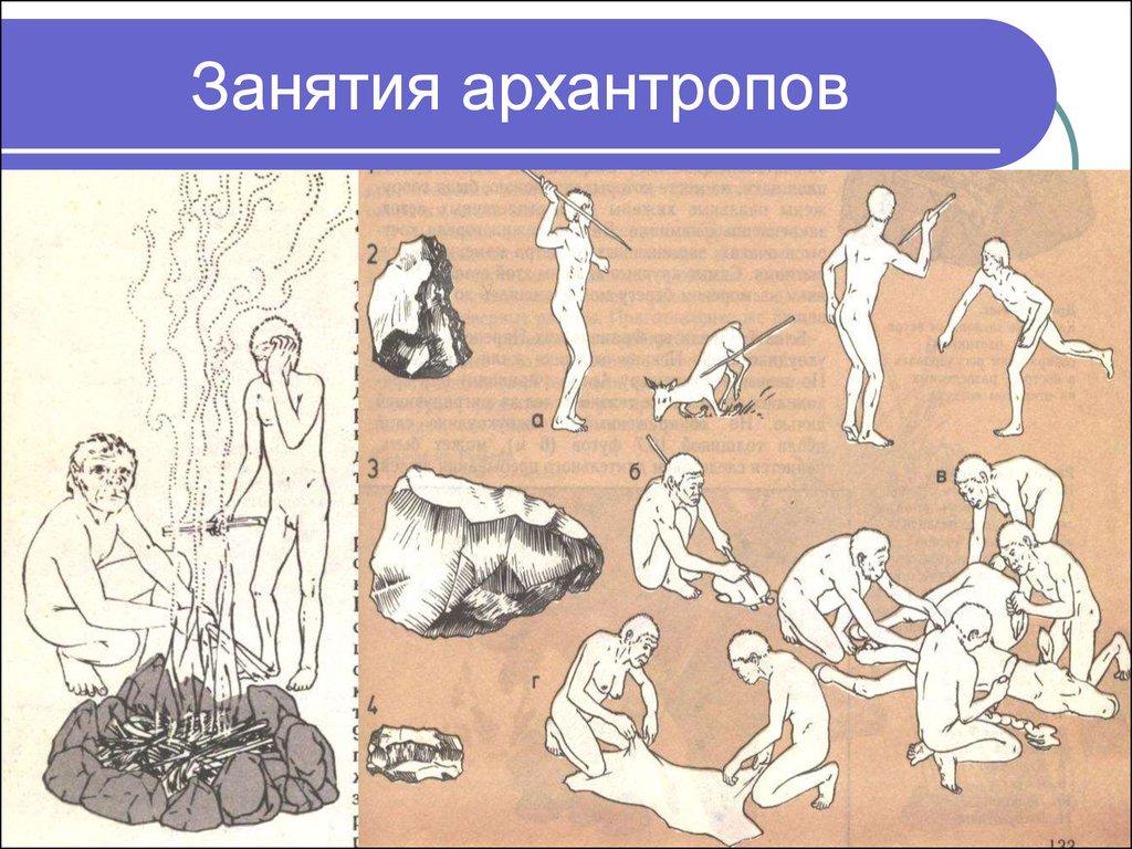 архантропы в картинках взрослого лабрадора крупных