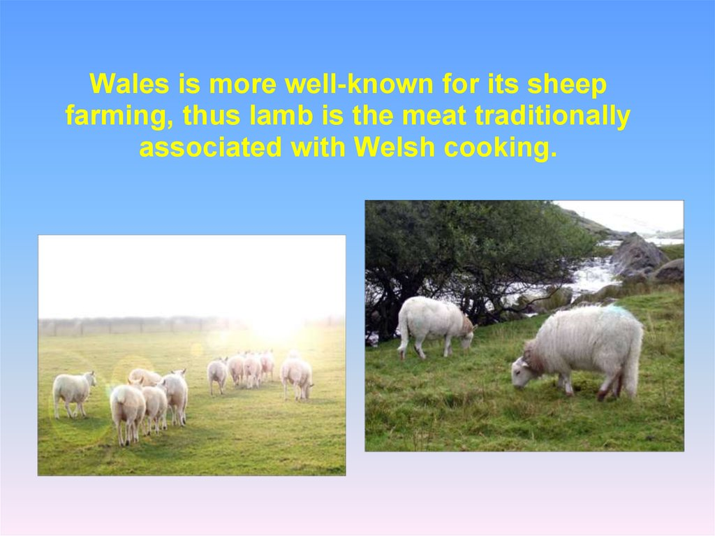 Wales is more well-known for its sheep farming, thus lamb is the meat traditionally associated with Welsh cooking.