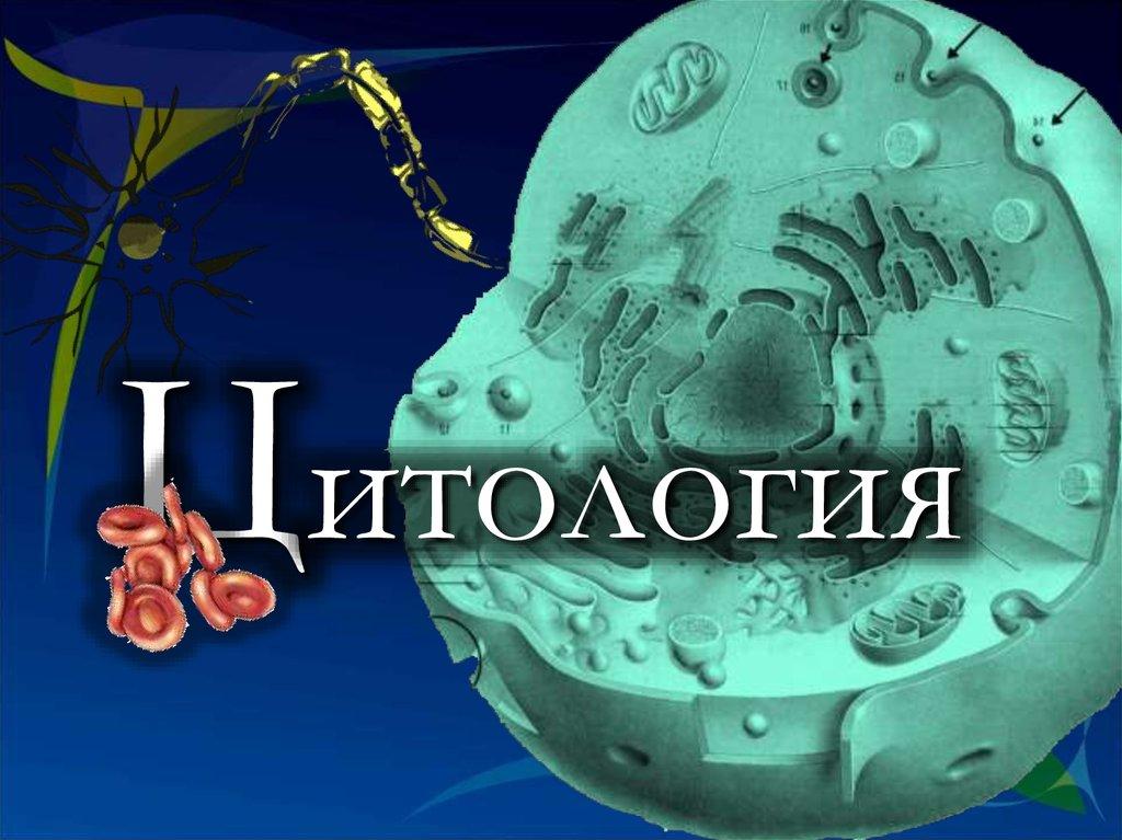 Цитология - Презентация 101059