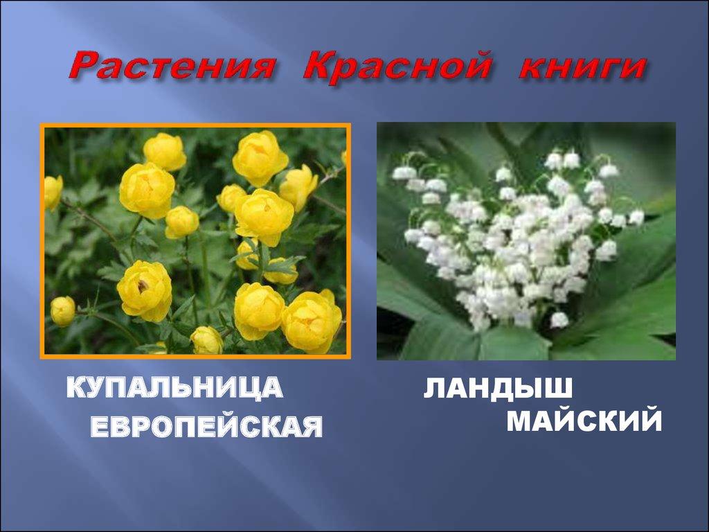Картинки растений из красной книги, подружкам спасибо