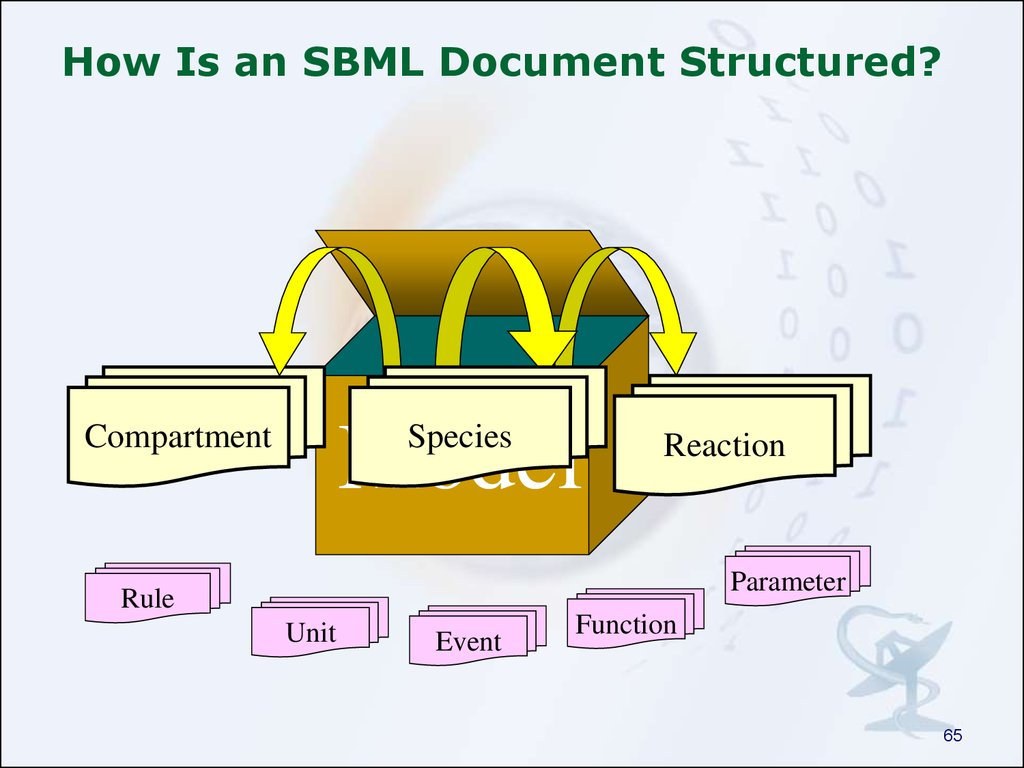 How Is an SBML Document Structured?