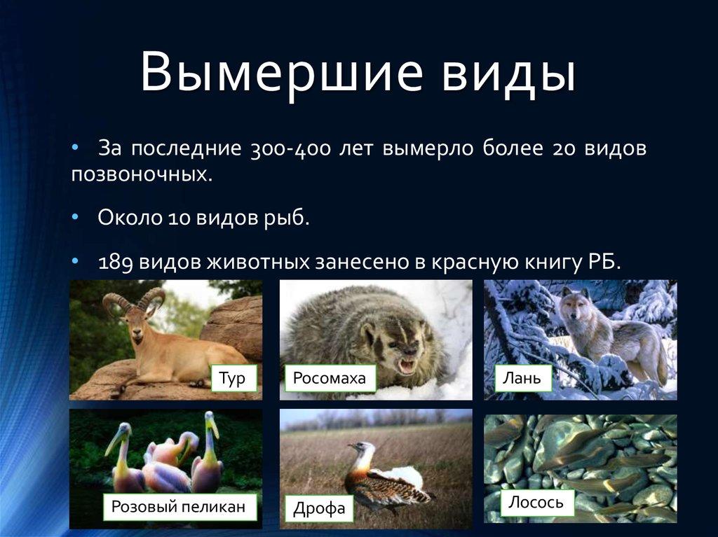 Реферат на тему животный мир башкортостана 9144