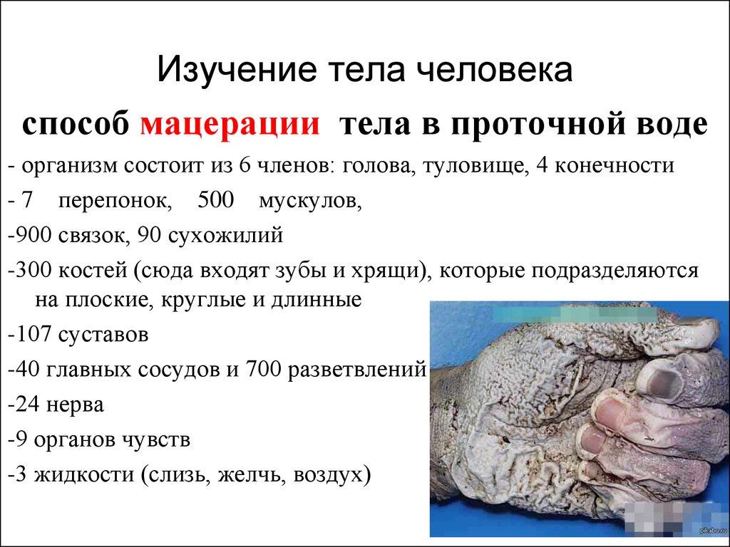 Презентация человека с знакомство телом