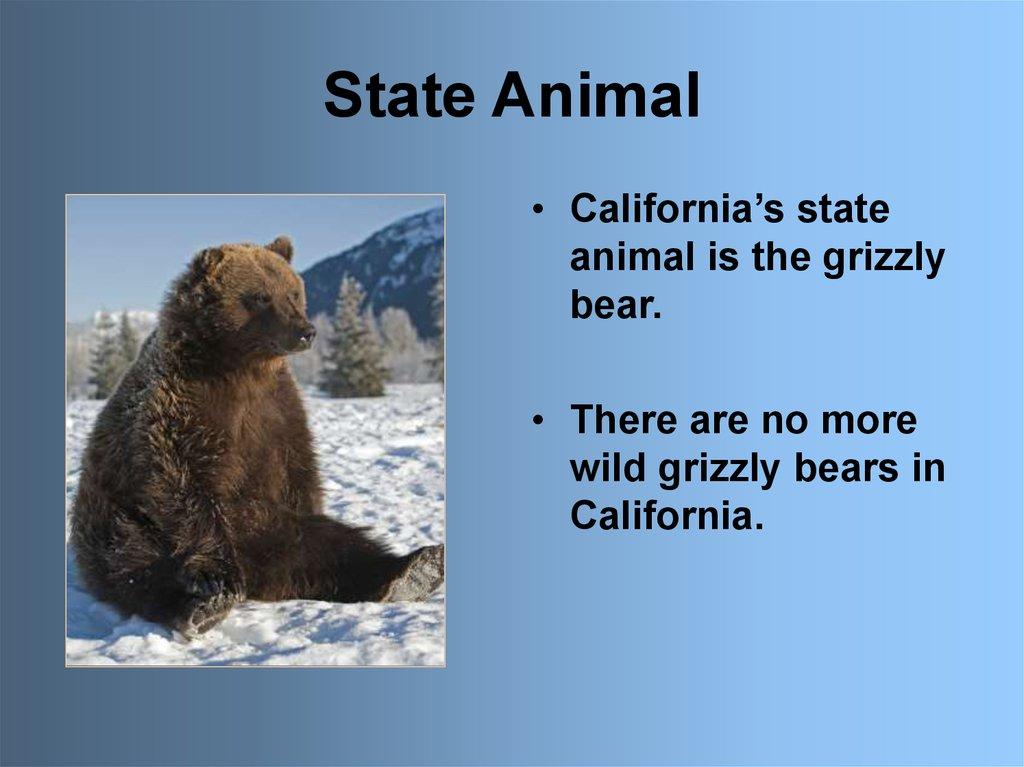 State Symbols California Online Presentation