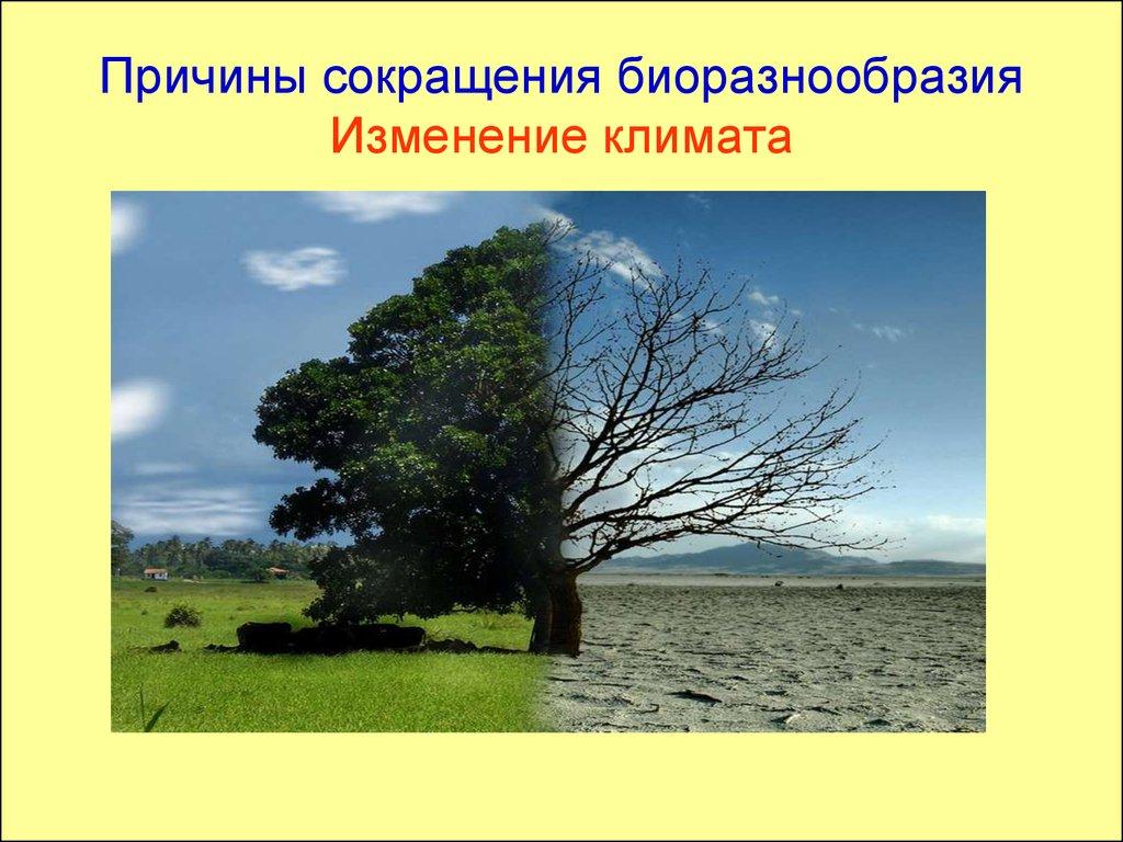 разработка урока биоразнообразие башкортостана того