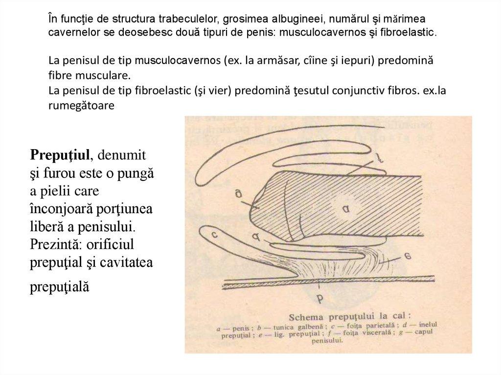 Ingrosare de penis cu acid hialuronic - Swiss EstetiX București