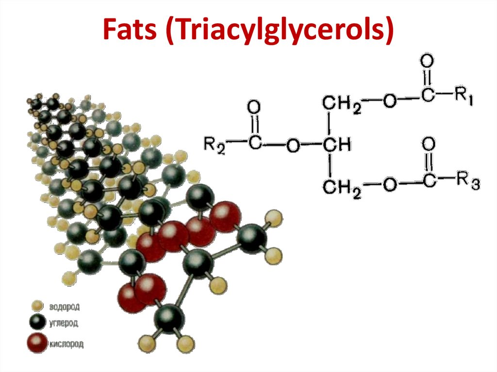 Fats (Triacylglycerols)