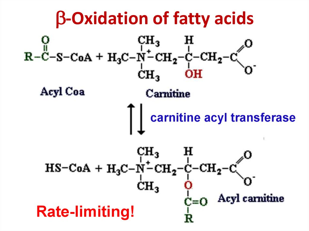 -Oxidation of fatty acids