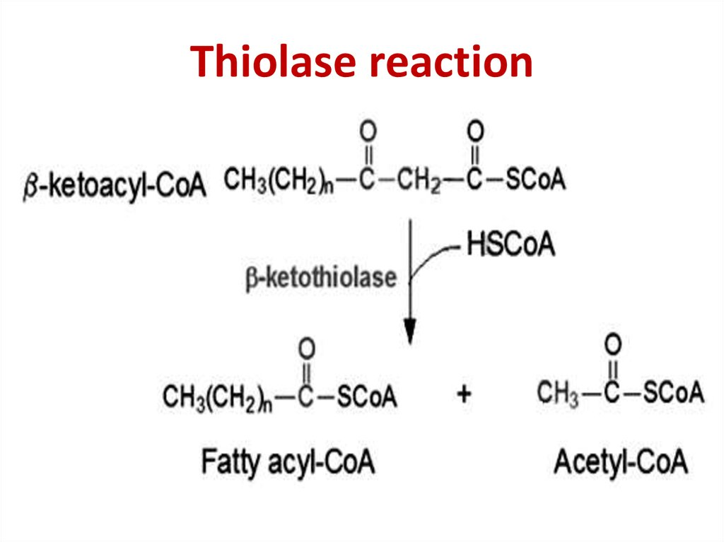 Thiolase reaction