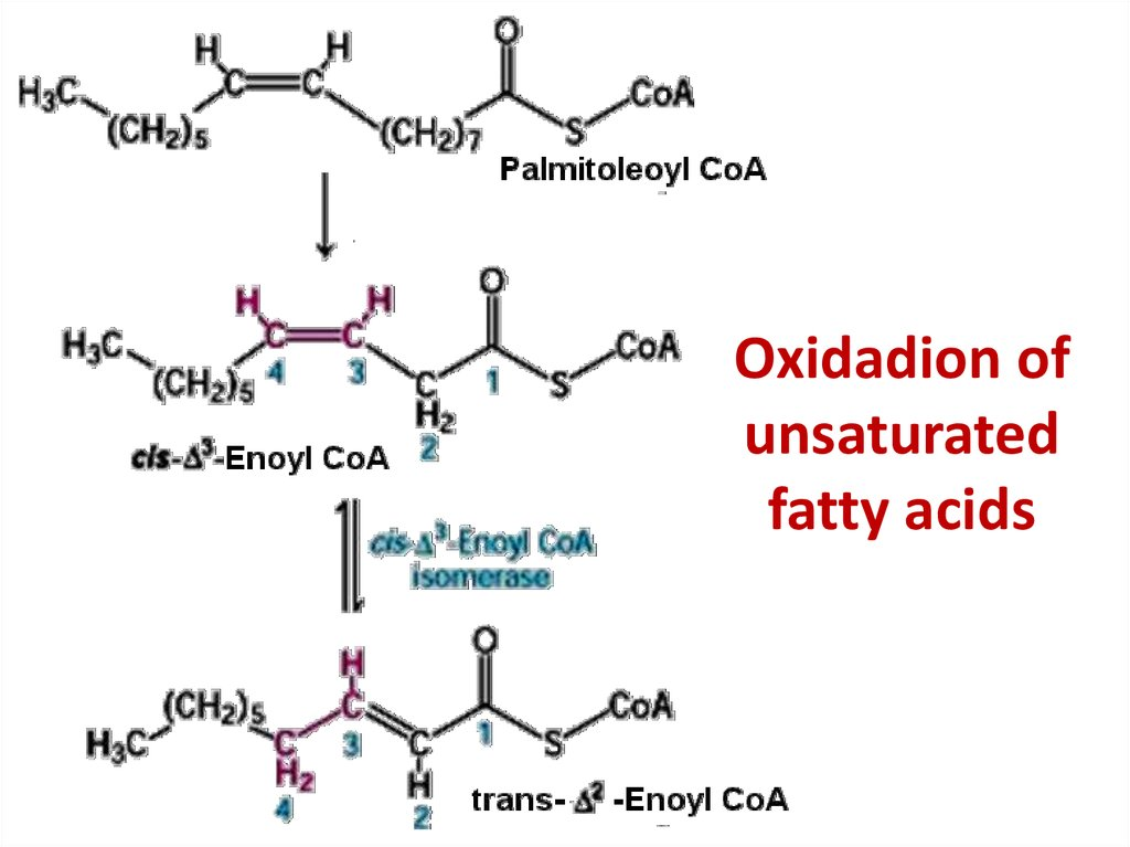 Oxidadion of unsaturated fatty acids
