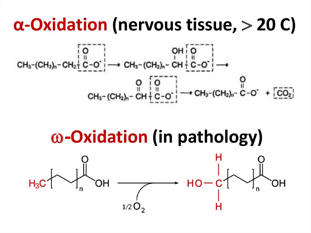 α-Oxidation (nervous tissue,  20 С)