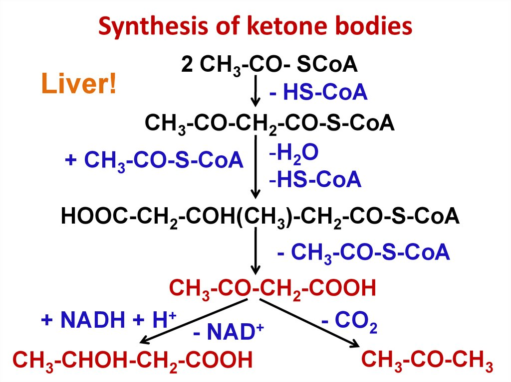 Synthesis of ketone bodies